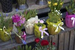 Jacinthes et ranunculus dans des pots à vendre Photos libres de droits