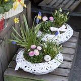 Jacinthes et ranunculus dans des pots à vendre Image stock