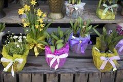 Jacinthes et ranunculus dans des pots à vendre Images stock