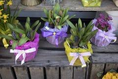 Jacinthes et ranunculus dans des pots à vendre Image libre de droits