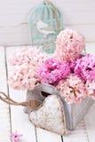 Jacinthes roses à la boîte et au coeur décoratif sur le dos en bois blanc Photos libres de droits