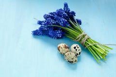 Jacinto con los huevos de codornices en una madera contrachapada azul fotografía de archivo libre de regalías