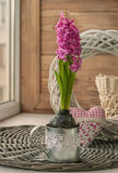 Jacinto cor-de-rosa no copo do ferro na janela Fotos de Stock