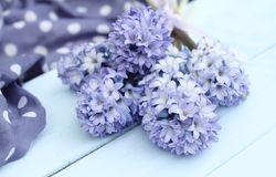 Jacinto del azul del arreglo floral de la primavera Imagenes de archivo