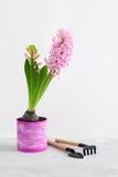 Jacinto rosado y herramientas que cultivan un huerto en fondo concreto gris Fotografía de archivo