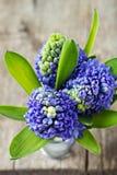 Jacintos azuis Imagem de Stock Royalty Free