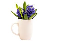 Jacintos azuis Imagens de Stock Royalty Free