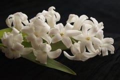 Jacintos blancos hermosos hermosos imagen de archivo libre de regalías