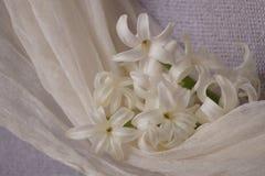 Jacintos blancos hermosos hermosos imagen de archivo