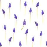 Jacintos de uva inconsútiles Fotografía de archivo