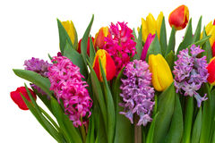 Jacintos e tulipas Fotografia de Stock Royalty Free