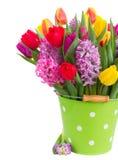 Jacintos e tulipas Foto de Stock Royalty Free