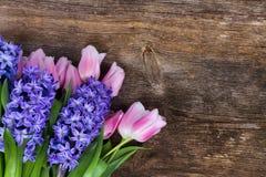 Jacintos e tulipas Fotografia de Stock