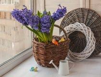Jacintos en una cesta en la ventana Imagen de archivo libre de regalías