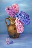 Jacintos hermosos en un florero Imágenes de archivo libres de regalías