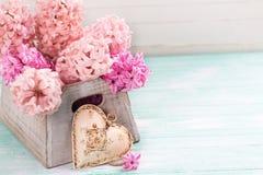 Jacintos rosados frescos en caja y corazón decorativo en la turquesa w Fotografía de archivo