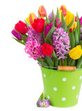 Jacintos y tulipanes Foto de archivo libre de regalías