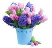 Jacintos y tulipanes Imágenes de archivo libres de regalías