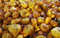 Jack Be Little Pumpkins pequeno Fotos de Stock Royalty Free