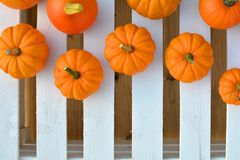 Jack be little pumpkins on white boards Royalty Free Stock Images