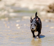 Jack at the creek royalty free stock photography