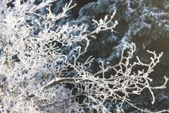 Jack Frost Arkivbild