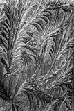 Jack frost etching beautiful pattern, converted to look like a pencil drawing Stock Photography
