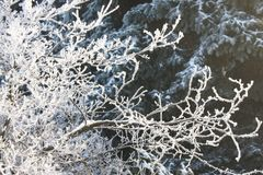 Jack frost stock photography