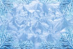 Jack frost ice crystal patterns & snowy spruce Stock Image