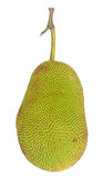 Jack-fruit. The whole jack-fruit on white background Royalty Free Stock Photos
