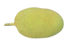 Jack Fruit Fotografia Stock