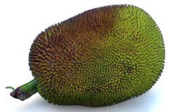 Jack Fruit Stockbilder