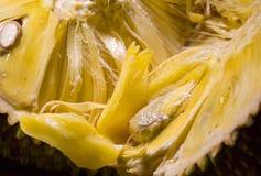 Jack Fruit Imagens de Stock