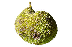 Jack Fruit Immagini Stock