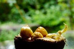 Jack Fruit Imagen de archivo libre de regalías