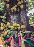 Jack Fruit Arkivfoto