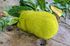 Jack-fruit. Royalty Free Stock Photo
