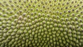 Jack fruit green close up design Royalty Free Stock Image