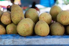 Jack fruit or moraceae Royalty Free Stock Images