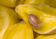 Jack fruit. Is often seen on the  tree beside the road, in the park, and on the mountain in tropical area Stock Image