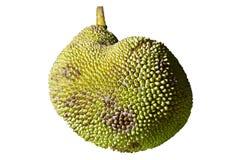 Jack fruit, whole body of jack fruit with white background Stock Images
