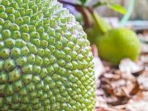 Jack fruit peel Stock Photography