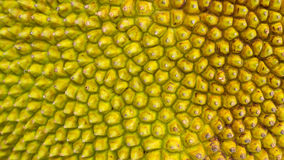 Jack Fruit Skin Stock Photos