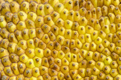 Jack fruit skin texture Royalty Free Stock Image