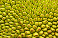 jack fruit skin texture, Royalty Free Stock Photography