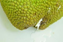 Jack fruitgom die van kelk het dalen op tegelvloer stromen stock foto's