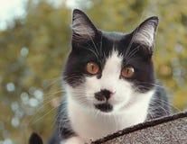 Jack le chat se reposant sur notre toit Image stock