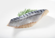 Jack mackerel Royalty Free Stock Image