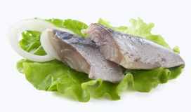 Jack mackerel Royalty Free Stock Images