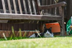 Jack o gato que descansa sob o banco Fotos de Stock Royalty Free